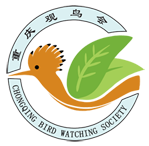 重庆观鸟会 Chongqing Bird Watching Society